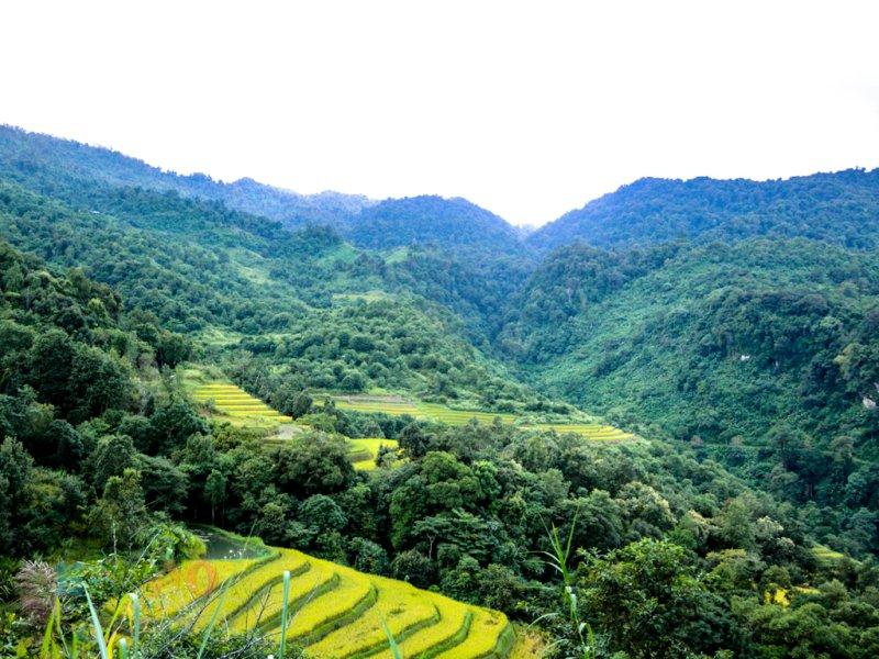 Image result for Manipur green ambassador