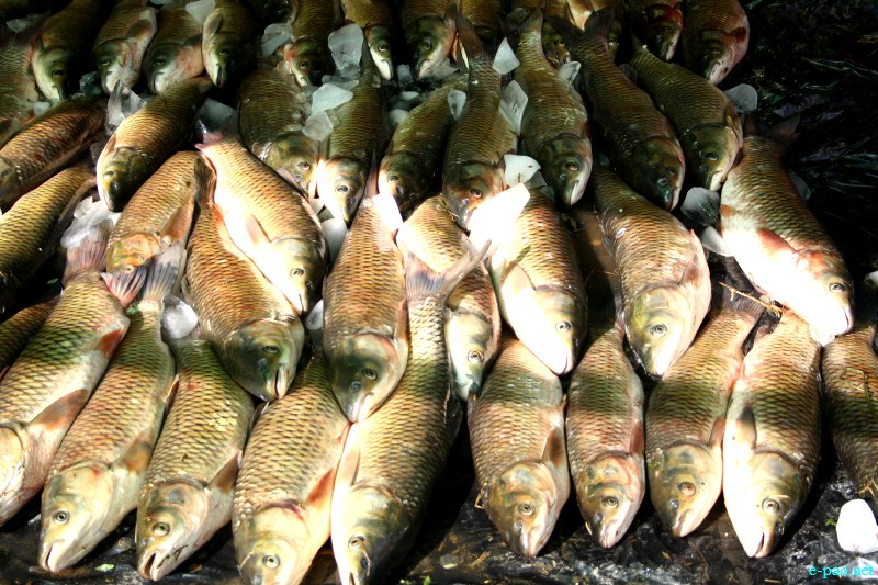 Fish Fair cum Fish crop competition, 2012 at Hapta Kangjeibung, Imphal :: 14