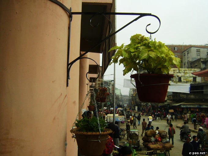 View of the flower pots at day