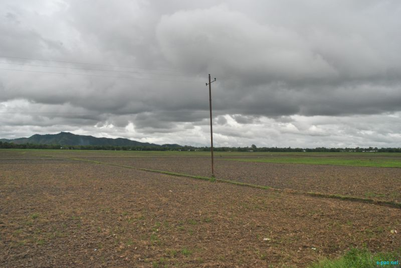 Drought looming : The condition of Paddy field in Thoubal district :: last week of July 2012