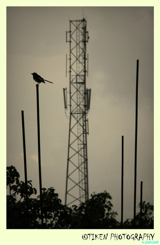 A mobile phone tower