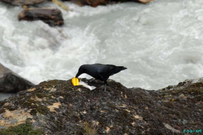 Himalayan Fauna Through My Lenses Jinendra Maibam At
